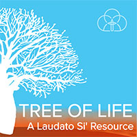 Tree of Life image for a Laudato Si' Resource